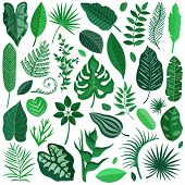 Collection Of Green Tropical Leaves, Palm Tree Branches, Banana Leaf And Exotic Rainforest Leaves In poster
