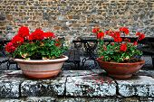 picture of salvatore  - Flowers in Montalcino - JPG