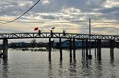 construção de ponte de madeira na terra do pântano