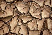 Draugh Soil