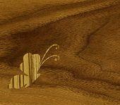 Butterflies of wood veneer