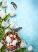 Easter composition with Easter eggs in nest and white tulips on the blue background. Bunch of spring poster