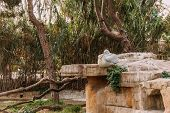 Pelican Sitting On Stone In Zoological Park, Barcelona, Spain poster