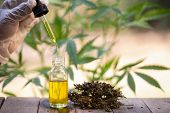 Hemp Oil., Hand Holding Bottle Of Cannabis Oil Against Marijuana Plant, Cbd Oil Pipette. poster