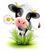 image of calf  - Cute Holstein cow in green grass - JPG