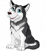 picture of sled dog  -  Cartoon illustration of Alaskan Malamute dog - JPG
