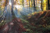 Autumnal forest and sun rays with mist,  Poland , Ojcow, National Park.