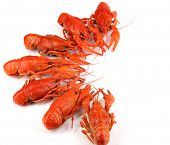 Tasty boiled crayfishes isolated on white