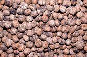 Walnuts Closeup Background