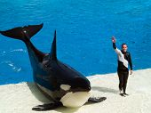 Shamu And It\'S Trainer