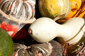 Harvest of gourds and squash
