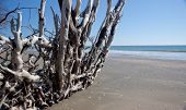 tree roots on a sandy beach
