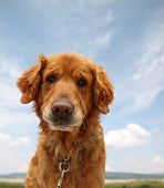 foto of puppy dog face  - a dog enjoying the outdoors on a beautiful summer day - JPG