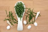 Samphire in a white porcelain spoon with shell selection over beech wood background.