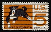 Animals 1966