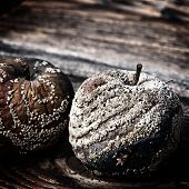 Rotten Apple Against Old Wooden Planks With A Retro Effect