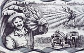 CUBA - CIRCA 2006: Agricultural Scene on 20 Pesos 2006 Banknote from Cuba.