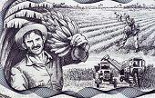 CUBA - CIRCA 2006: Agricultural Scene on 20 Pesos 2006 Banknote from Cuba.
