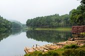 Raft Bamboo Lake And Pine Forest At Morning