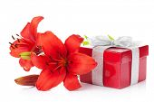 Red lily flower and gift box. Isolated on white background