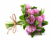 stock photo of red clover  - Red clover - JPG