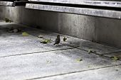 Lonely Sparrow Under Urban Park Bench