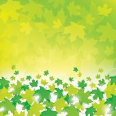 Green Leaves Background
