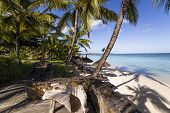 pic of mauritius  - Parasols and Coconut trees on Mont - JPG