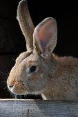 picture of rabbit hutch  - Beautiful brown rabbit in hutch - JPG