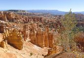Tree and rock formations in Bryce Canyon National Park, Utah