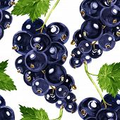 vector seamless pattern with blackcurrant
