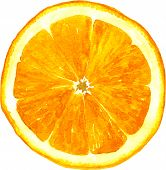 slice of orange drawing by watercolor