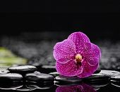 Still life with orchid with pebbles on wet background