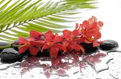 Branch orchid with black stones with green palm background