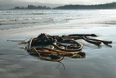 stock photo of pacific rim  - Beach at Pacific Rim National Park - JPG