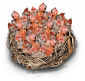 image of bird-nest  - Demanding Citizens concept and social media symbol as a crowd metaphor with a big chaotic group of baby birds in a giant nest complaining to get services - JPG