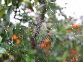 image of cobweb  - Cobweb wetted by the rain on a beautifull day - JPG