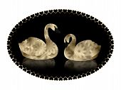 image of black swan  - Pair of beautiful gold and black  - JPG