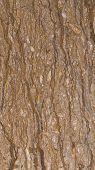 stock photo of slab  - unusual brown beautiful marble with dark streaks stains and spots in the big beige slab - JPG