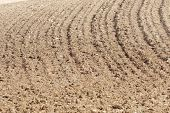 pic of plow  - Texture of a plowed field - JPG