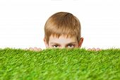 pic of peep  - Portrait of a boy peeping out through fresh spring green grass close up - JPG