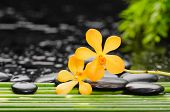 stock photo of yellow orchid  - Yellow orchid and stones with bamboo grove on wet background - JPG