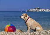 Beach Ball Keeper