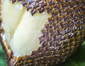 picture of green snake  - Snake Fruit and Green Leaf on the Wood Table. ** Note: Shallow depth of field - JPG