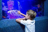image of algae  - Young man touching an algae tank at the aquarium - JPG
