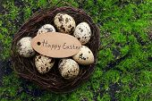 stock photo of grass bird  - Bird eggs in nest on green grass background - JPG