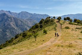 stock photo of dog tracks  - Two female walkers and Border Collie dog on a track near Novella in the Balagne region of north Corsica with the village of Lama and mountains in the background - JPG
