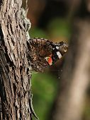 Mariposa Profile0