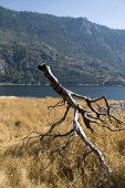 Hetch Hetchy Reservoir with a dead tree in the foreground