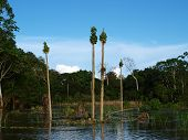 Flooded papaya crops